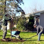 Workers planting a gree