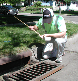 MCD Employee catching mosquitoes in storm drain